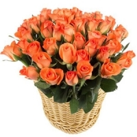 48 roses, Basket of Orange