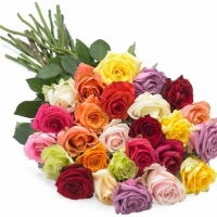 36 Multicolored Roses