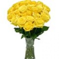 yellow roses 3 dozen