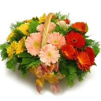 mix Gerberas basket