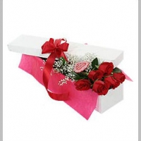 Holland roses in box
